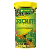 Tropical Crickets 250ml